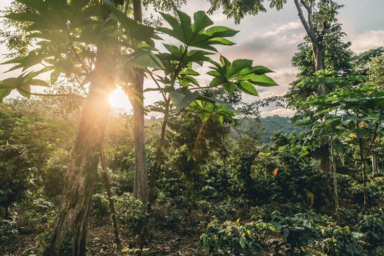 Coffee farm, El Salvador