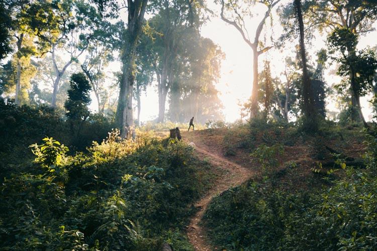 Path through coffee, Ethiopia