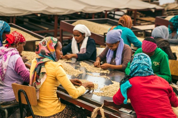 Coffee sorting, Ethiopa