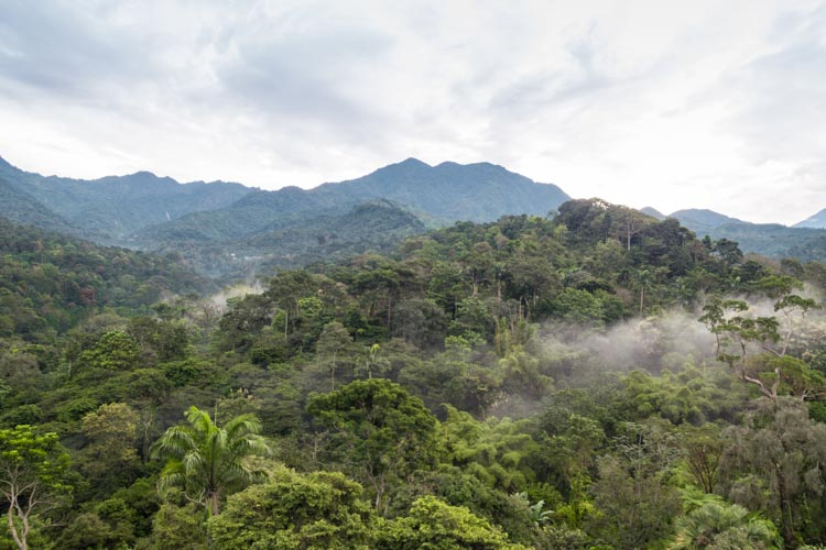 Coffee landscape from drone, Chiapas, Mexico
